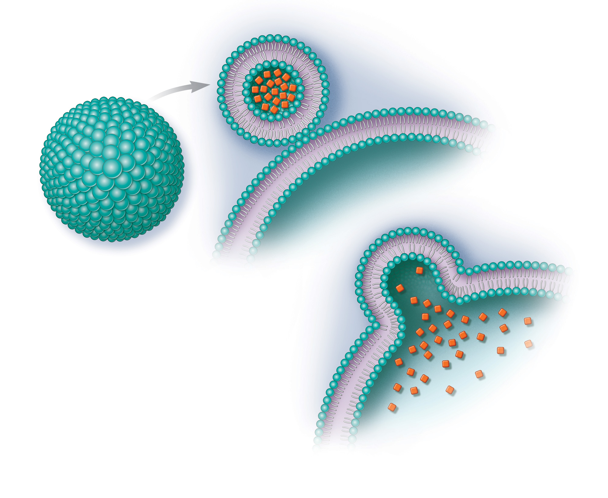 Liposome encapsulation