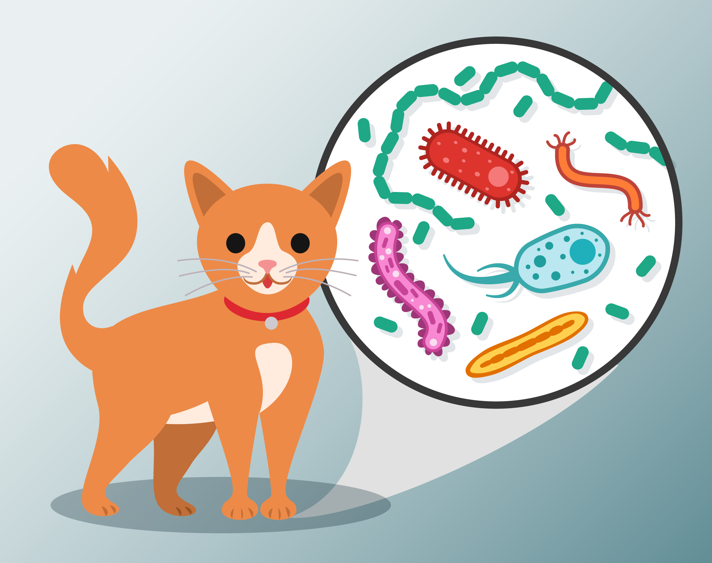 Cat with Bacteria Callout